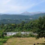 水林自然林のブログ・記事一覧