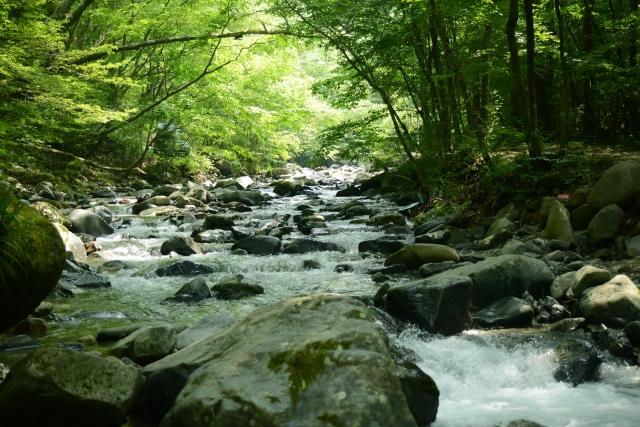 道志の森キャンプ場のブログ・記事一覧